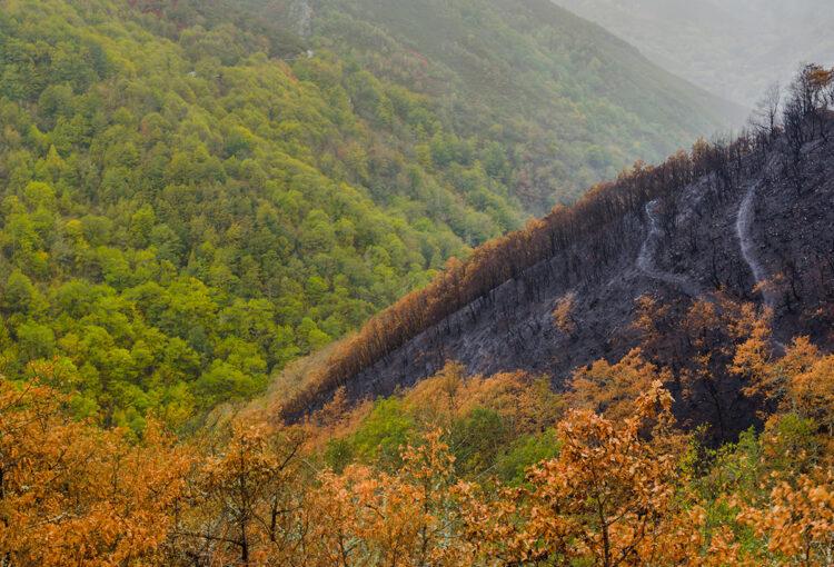 Importancia de la repoblación forestal