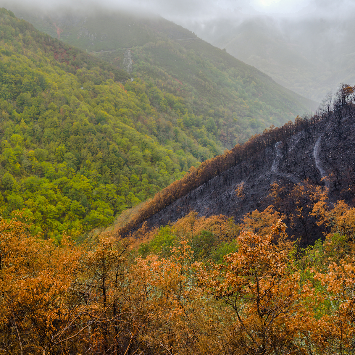 Importancia de la repoblación forestal para el medio ambiente