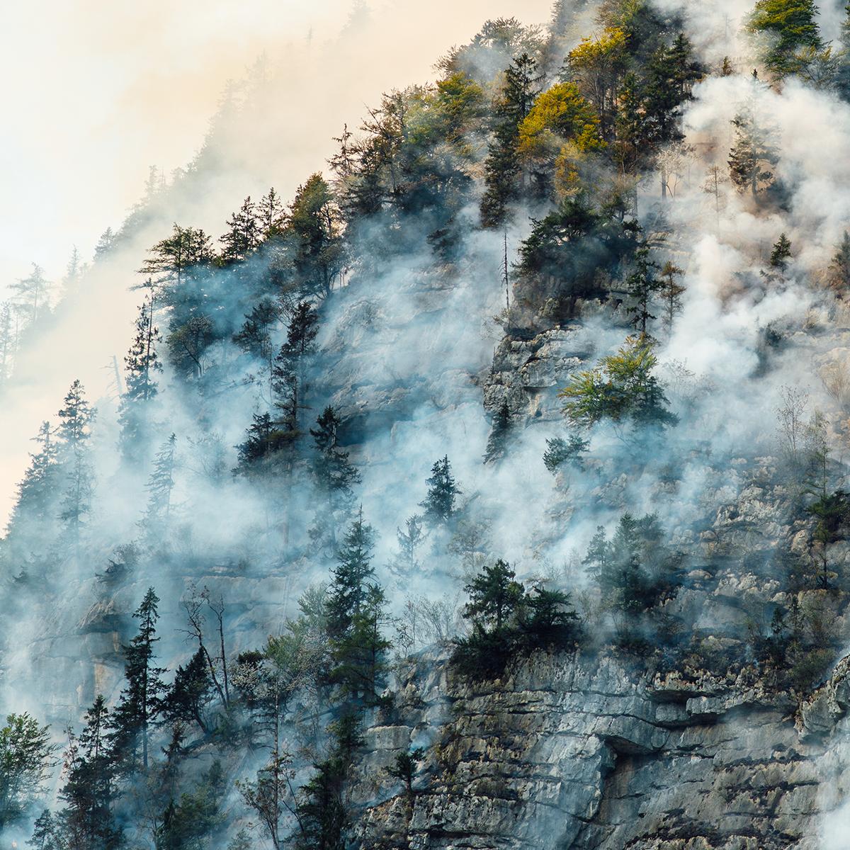 ¿Cómo prevenir incendios forestales? ¡Descubre las mejores técnicas!