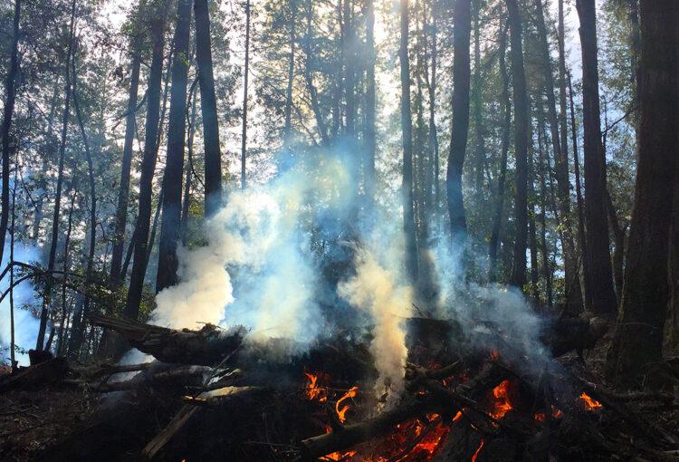 Por qué se originan los incendios forestales