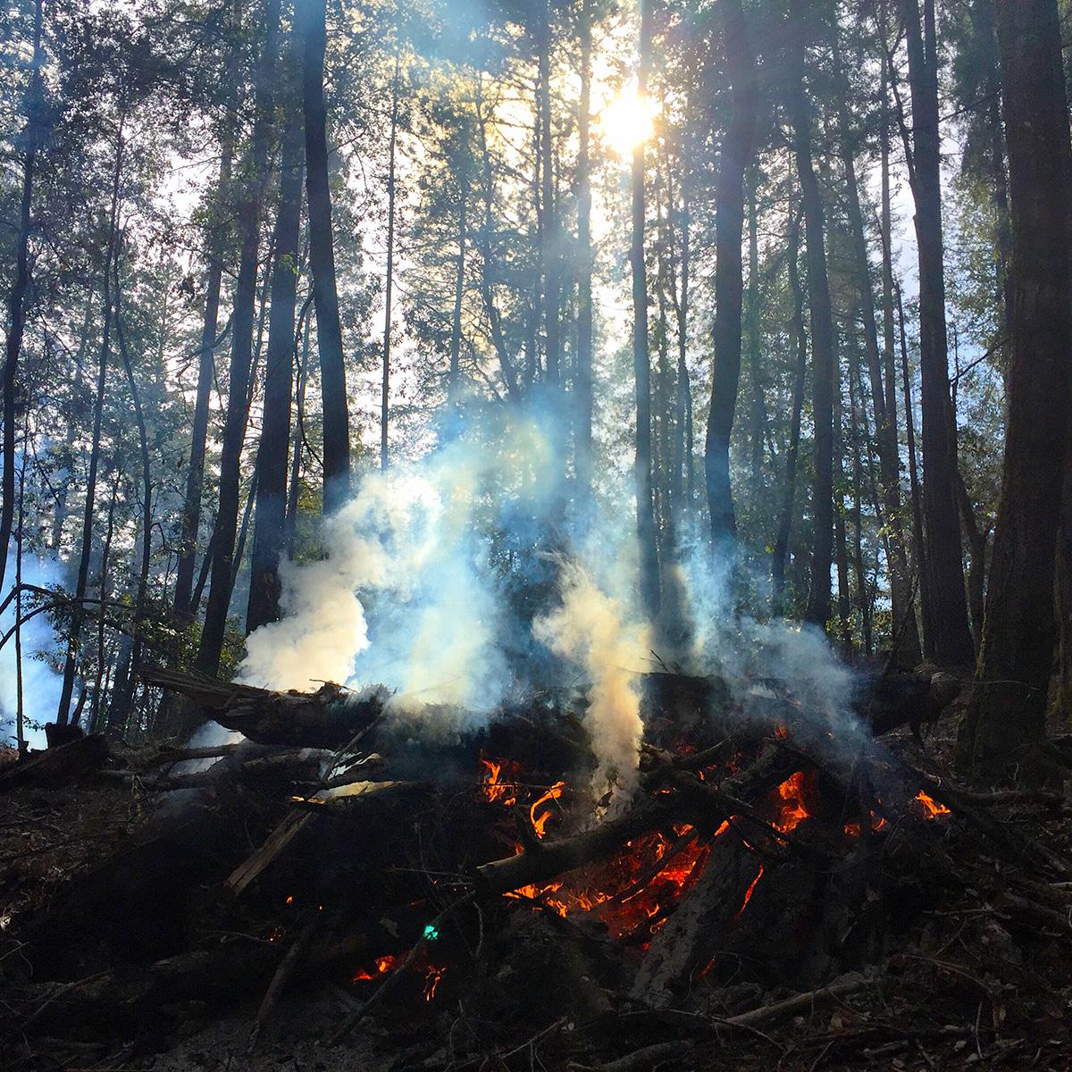 ¿Por qué se originan los incendios forestales? Causas y soluciones