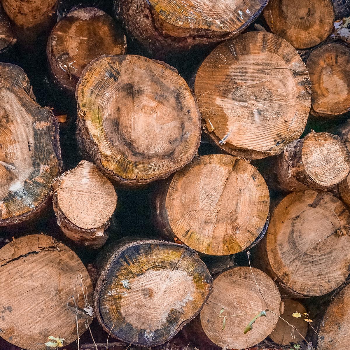 ¿Cómo afecta la explotación forestal al medio ambiente?