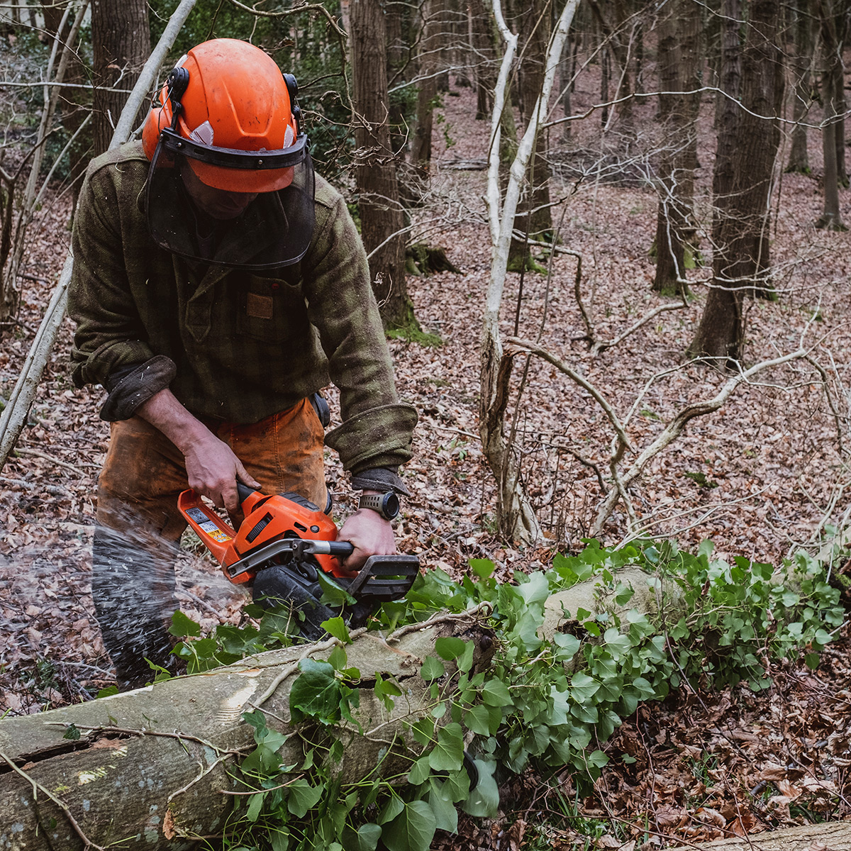 ¿Qué es el aprovechamiento forestal?